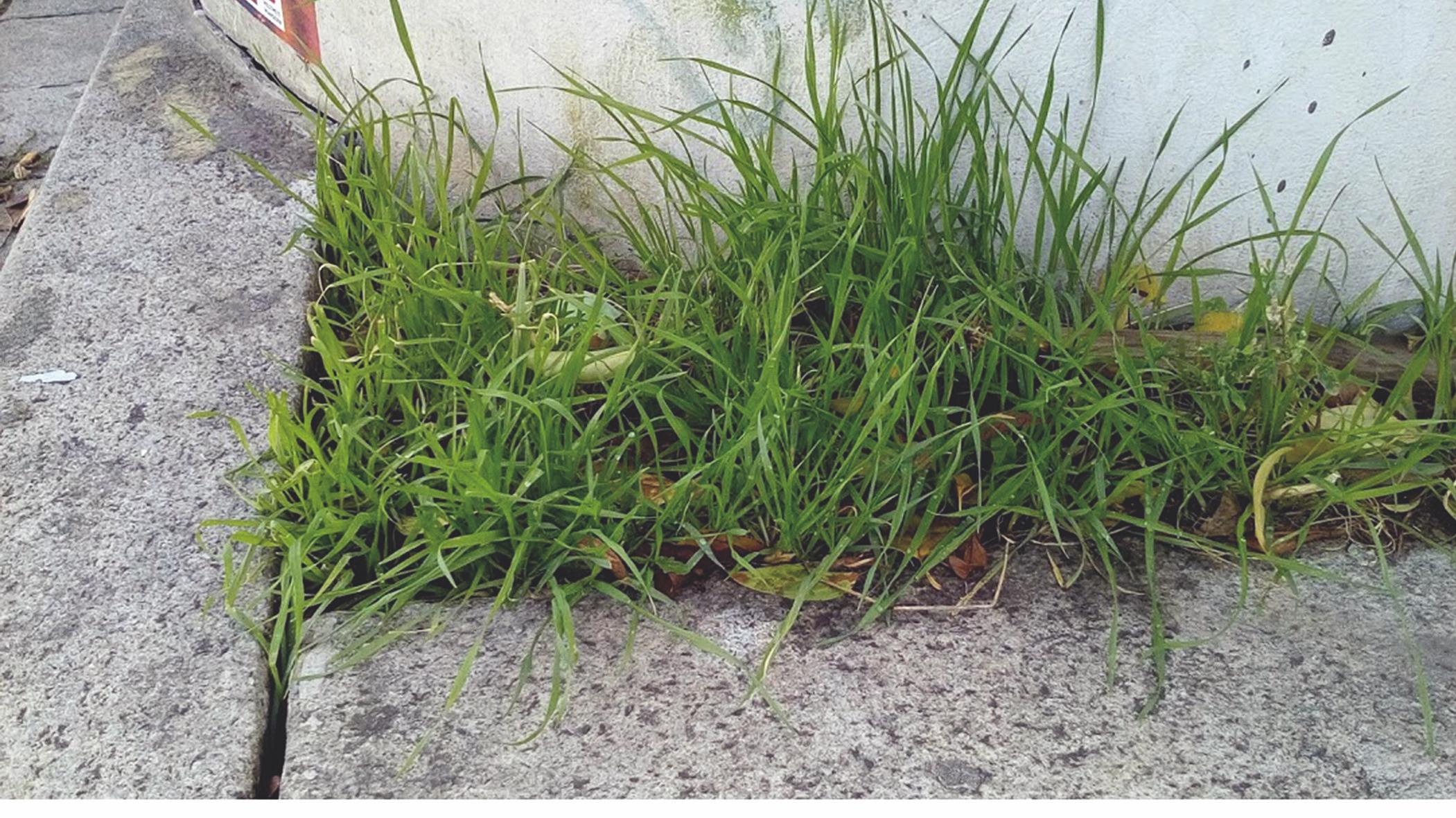 wild grass on concrete
