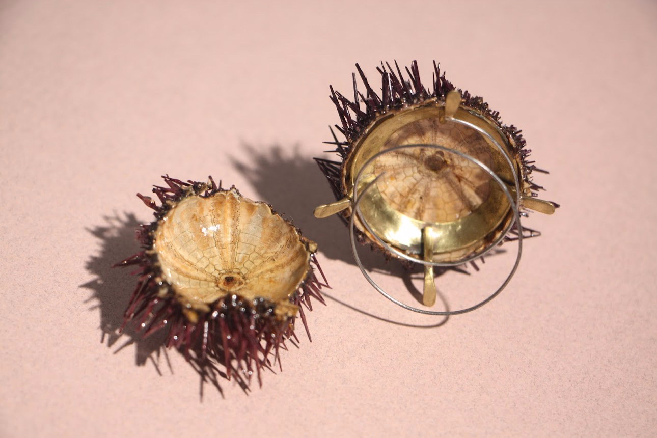 sea urchin brooches with stings